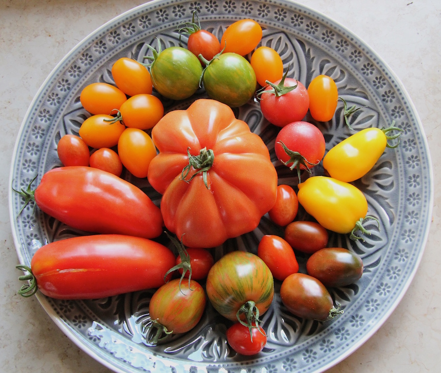 wunder_tomaten_vielfalt